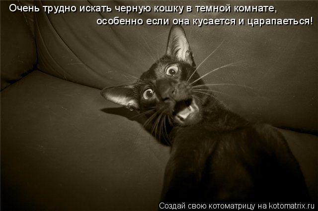 Котоматрица: Очень трудно искать черную кошку в темной комнате,  особенно если она кусается и царапаеться!
