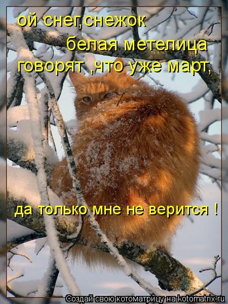 Котоматрица: ой снег,снежок белая метелица говорят ,что уже март, да только мне не верится !