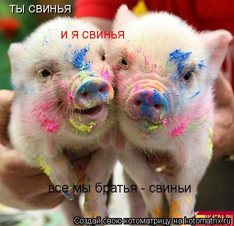 Котоматрица: ты свинья и я свинья все мы братья - свиньи