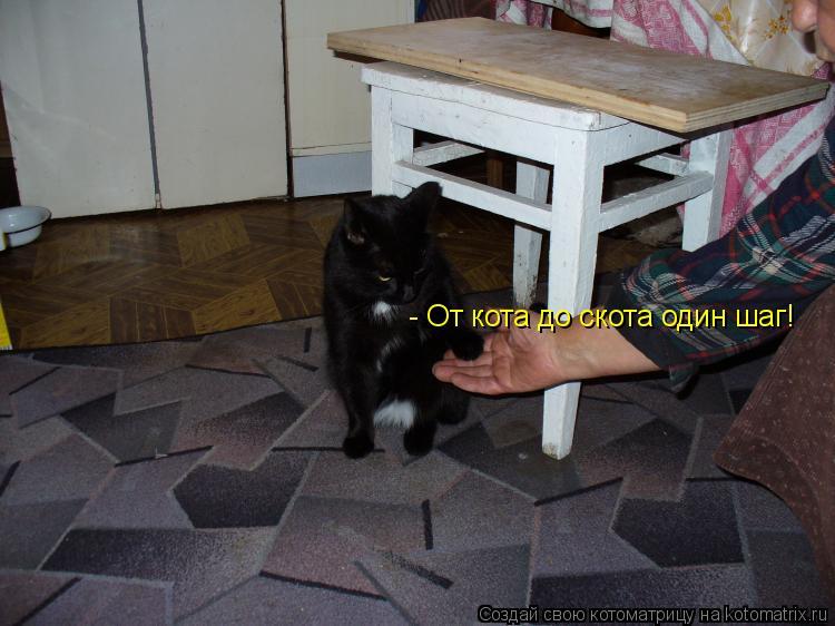 Котоматрица: - От кота до скота один шаг!