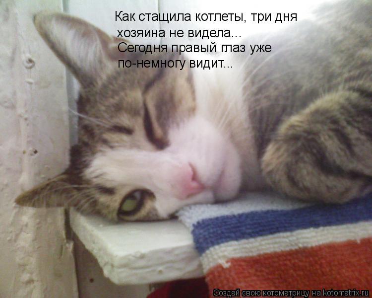 Котоматрица: Как стащила котлеты, три дня  хозяина не видела... Сегодня правый глаз уже  по-немногу видит...