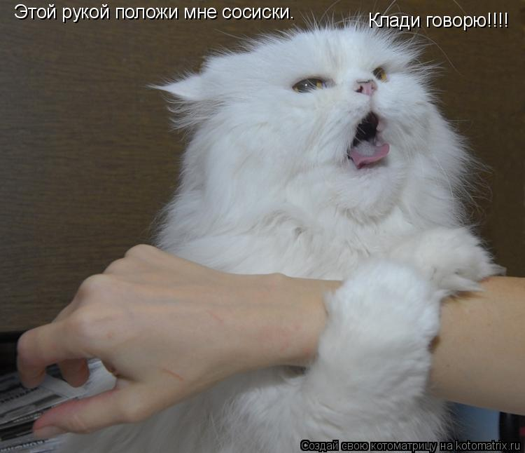 Котоматрица: Этой рукой положи мне сосиски.  Клади говорю!!!!