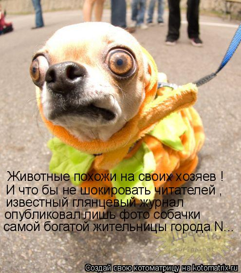 Котоматрица: Животные похожи на своих хозяев ! И что бы не шокировать читателей ,  известный глянцевый журнал опубликовал лишь фото собачки самой богато