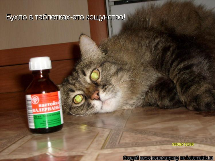 Котоматрица: Бухло в таблетках-это кощунство!