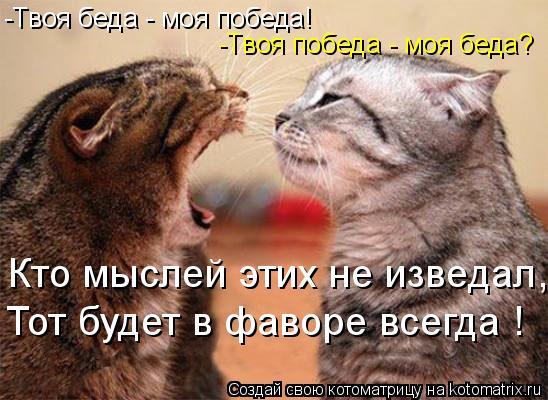 Котоматрица: -Твоя беда - моя победа! -Твоя победа - моя беда? Кто мыслей этих не изведал, Тот будет в фаворе всегда !