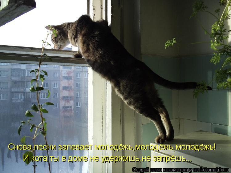 Котоматрица: Снова песни запевает молодёжь,молодёжь,молодёжь! И кота ты в доме не удержишь,не запрёшь...