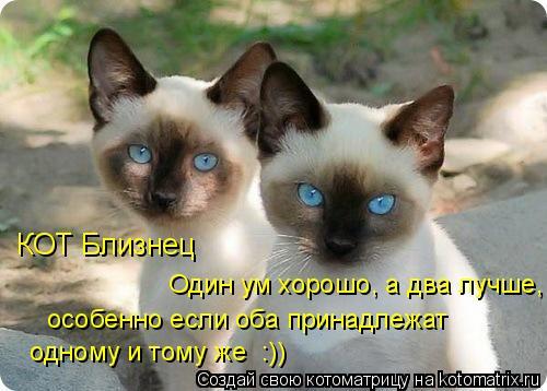 Котоматрица: КОТ Близнец  Один ум хорошо, а два лучше,  особенно если оба принадлежат  одному и тому же  :))