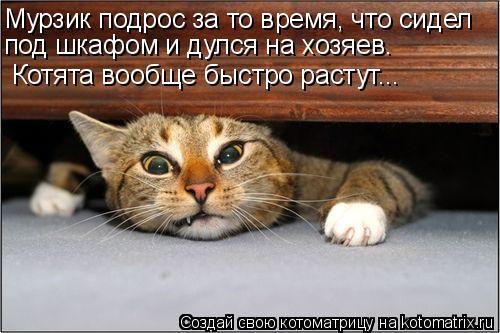 Котоматрица: Мурзик подрос за то время, что сидел  под шкафом и дулся на хозяев. Котята вообще быстро растут...