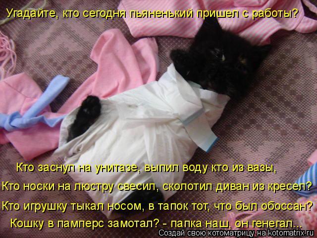 Котоматрица: Угадайте, кто сегодня пьяненький пришел с работы? Кошку в памперс замотал? - папка наш, он генегал... Кто заснул на унитазе, выпил воду кто из в