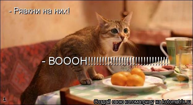 Котоматрица: - Рявкни на них! - ВОООН!!!!!!!!!!!!!!!!!!!!!!!!!!!!!