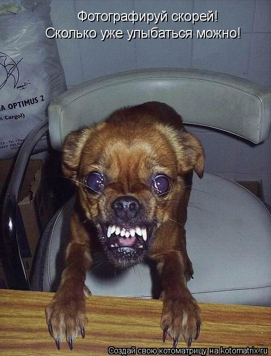 Котоматрица: Фотографируй скорей!  Сколько уже улыбаться можно!