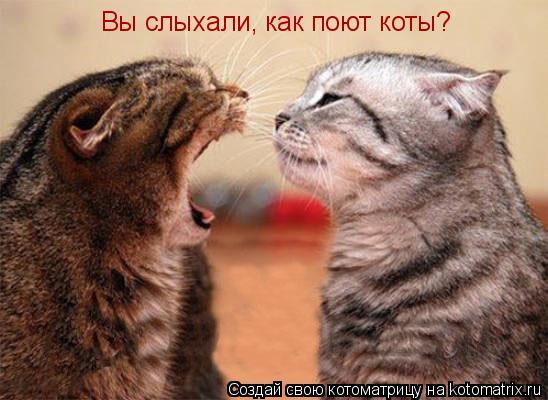 Котоматрица: Вы слыхали, как поют коты?