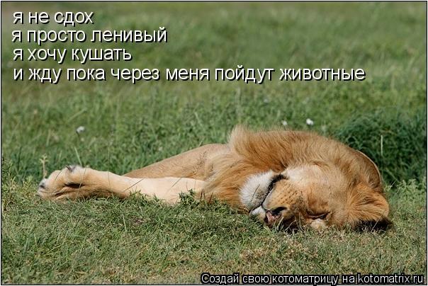 Котоматрица: я не сдох я просто ленивый я хочу кушать и жду пока через меня пойдут животные