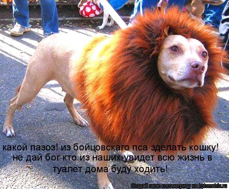 Котоматрица: какой пазоз! из бойцовскаго пса зделать кошку! не дай бог кто из наших увидет всю жизнь в  туалет дома буду ходить!