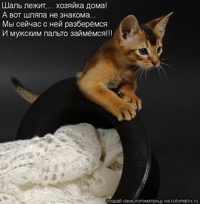 Котоматрица: Шаль лежит,... хозяйка дома! А вот шляпа не знакома... Мы сейчас с ней разберёмся И мужским пальто займёмся!!!