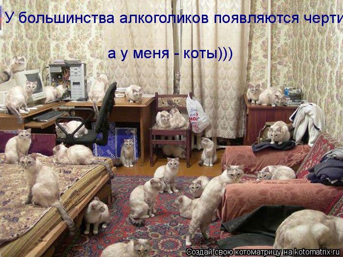Котоматрица: У большинства алкоголиков появляются черти а у меня - коты)))