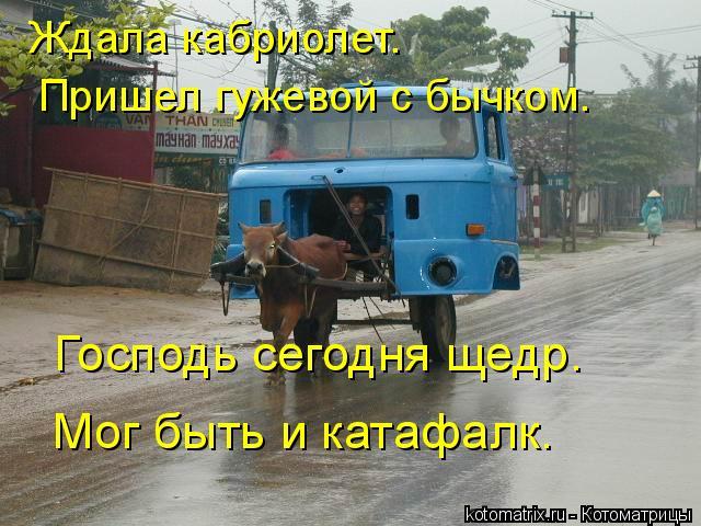 Котоматрица: Ждала кабриолет.  Пришел гужевой с бычком. Господь сегодня щедр.  Мог быть и катафалк.