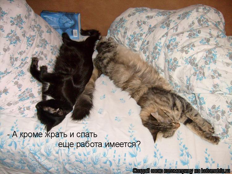 Котоматрица: - А кроме жрать и спать еще работа имеется?
