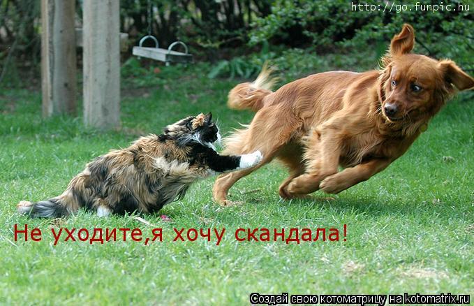 Котоматрица: Не уходите,я хочу скандала!