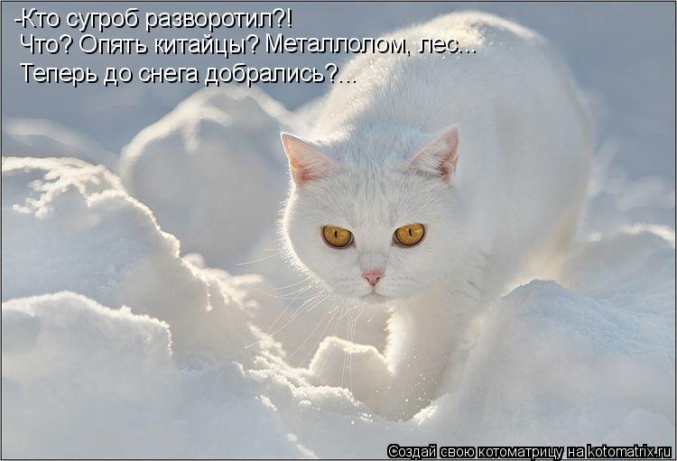 Котоматрица: -Кто сугроб разворотил?! Что? Опять китайцы? Металлолом, лес... Теперь до снега добрались?...