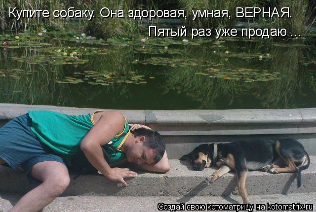 Котоматрица: Купите собаку. Она здоровая, умная, ВЕРНАЯ. Пятый раз уже продаю ...