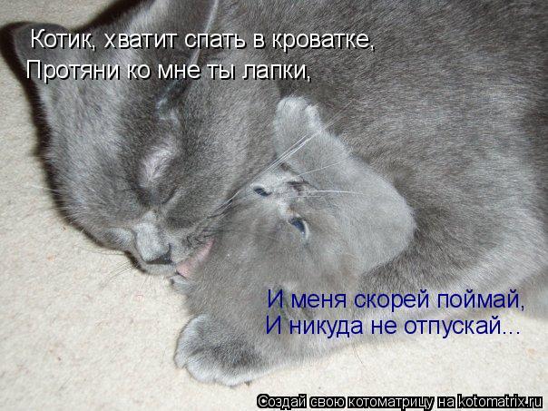 Котоматрица: Котик, хватит спать в кроватке, Протяни ко мне ты лапки, И меня скорей поймай, И никуда не отпускай...