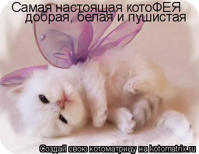 Котоматрица: Самая настоящая котоФЕЯ добрая, белая и пушистая