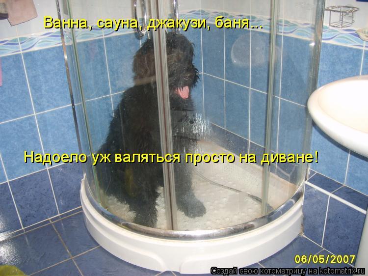Котоматрица: Ванна, сауна, джакузи, баня... Надоело уж валяться просто на диване!
