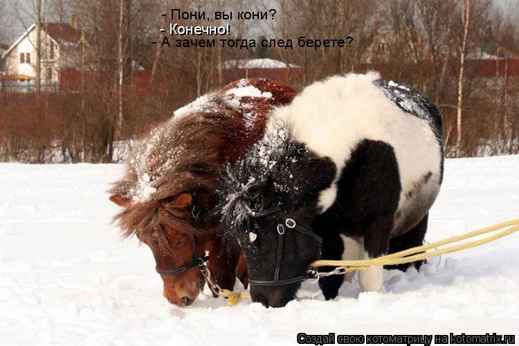 Котоматрица: - Пони, вы кони? - Конечно! - А зачем тогда след берете?