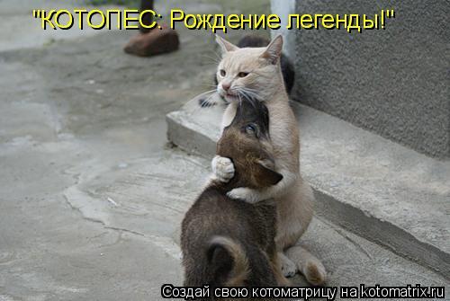 "Котоматрица: ""КОТОПЕС: Рождение легенды!"" ""КОТОПЕС: Рождение легенды!"""