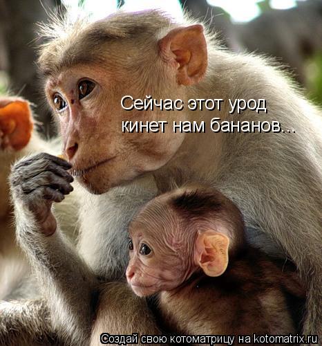 Котоматрица: Сейчас этот урод кинет нам бананов...