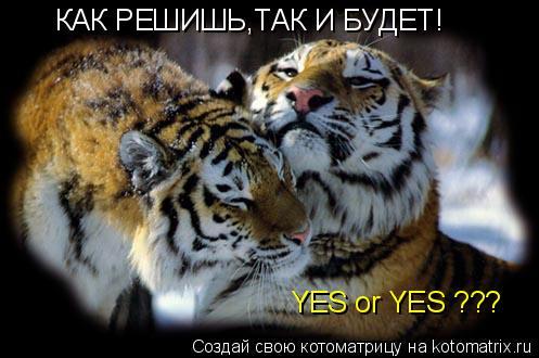 Котоматрица: КАК РЕШИШЬ,ТАК И БУДЕТ! YES or YES ???