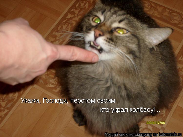 Котоматрица: Укажи, Господи, перстом своим  кто украл колбасу!...