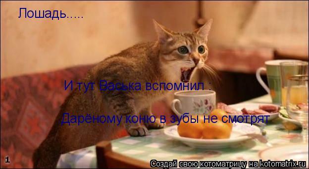 Котоматрица: Лошадь..... И тут Васька вспомнил : Дарёному коню в зубы не смотрят