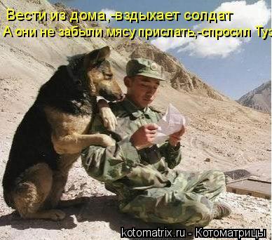 Котоматрица: Вести из дома,-вздыхает солдат А они не забыли мясу прислать,-спросил Туз