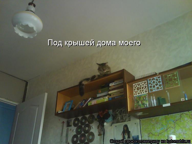 Котоматрица: Под крышей дома моего