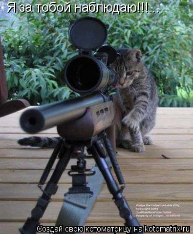 Котоматрица: Я за тобой наблюдаю!!!...