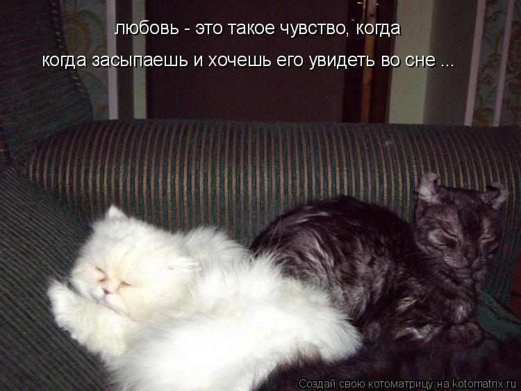 Котоматрица: любовь - это такое чувство, когда когда засыпаешь и хочешь его увидеть во сне ...