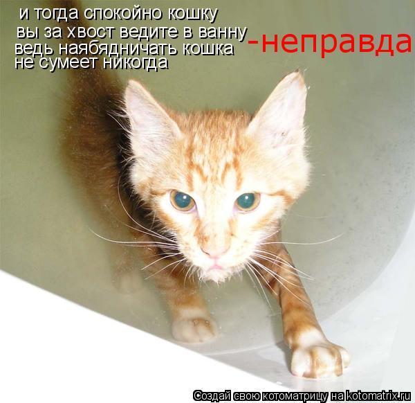 Котоматрица: и тогда спокойно кошку вы за хвост ведите в ванну ведь наябядничать кошка не сумеет никогда -неправда
