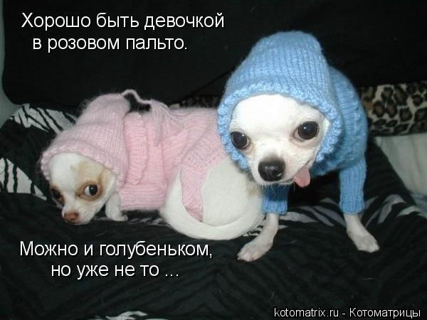 Котоматрица: Хорошо быть девочкой в розовом пальто. Можно и голубеньком,  но уже не то ...