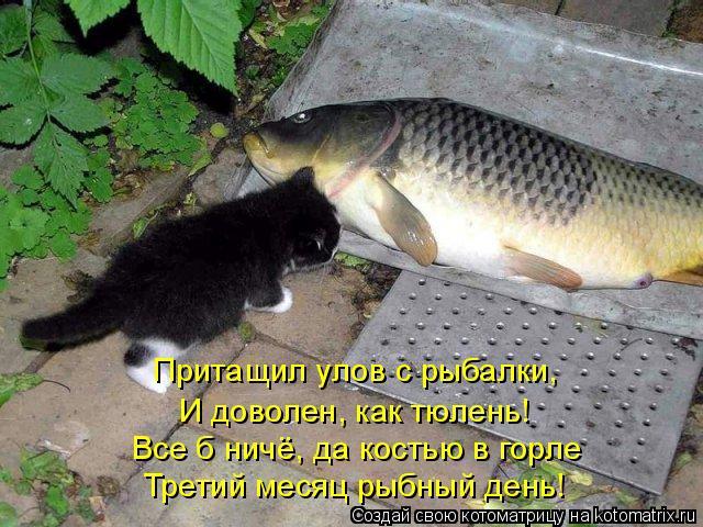 Котоматрица: Притащил улов с рыбалки,  И доволен, как тюлень! Все б ничё, да костью в горле  Третий месяц рыбный день!
