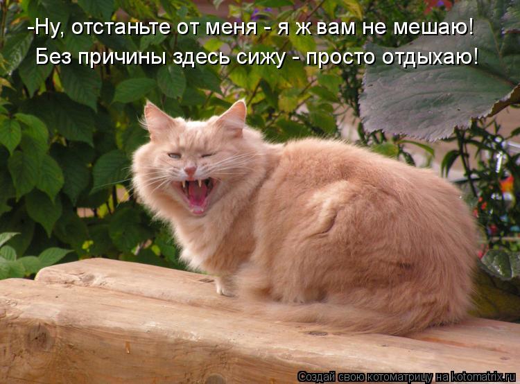Котоматрица: -Ну, отстаньте от меня - я ж вам не мешаю! Без причины здесь сижу - просто отдыхаю!