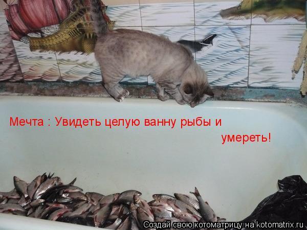 Котоматрица: Мечта : Увидеть целую ванну рыбы и  умереть!