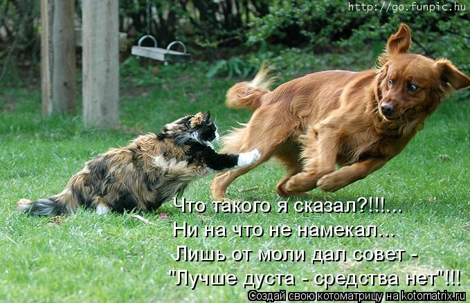 """Котоматрица: """"Лучше дуста - средства нет""""!!! Лишь от моли дал совет - Ни на что не намекал... Что такого я сказал?!!!..."""