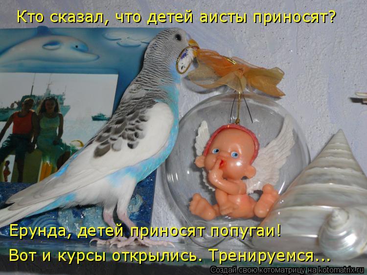 Котоматрица: Кто сказал, что детей аисты приносят? Ерунда, детей приносят попугаи! Вот и курсы открылись. Тренируемся...