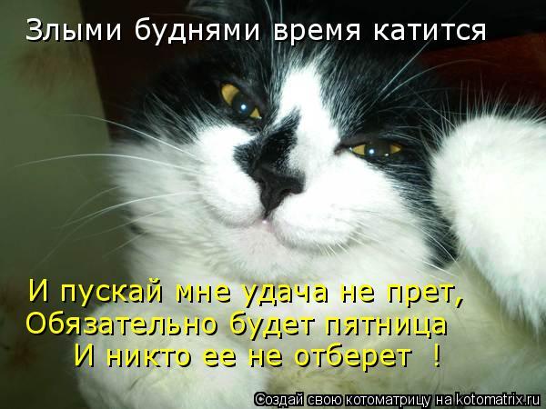 Котоматрица: Злыми буднями время катится  И пускай мне удача не прет, Обязательно будет пятница  И никто ее не отберет  !