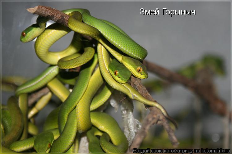 Котоматрица: Змей Горыныч
