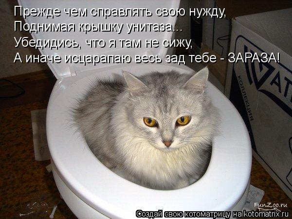 Котоматрица: Прежде чем справлять свою нужду, Поднимая крышку унитаза... Убедидись, что я там не сижу, А иначе исцарапаю весь зад тебе - ЗАРАЗА!