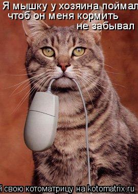 Котоматрица: Я мышку у хозяина поймал чтоб он меня кормить не забывал