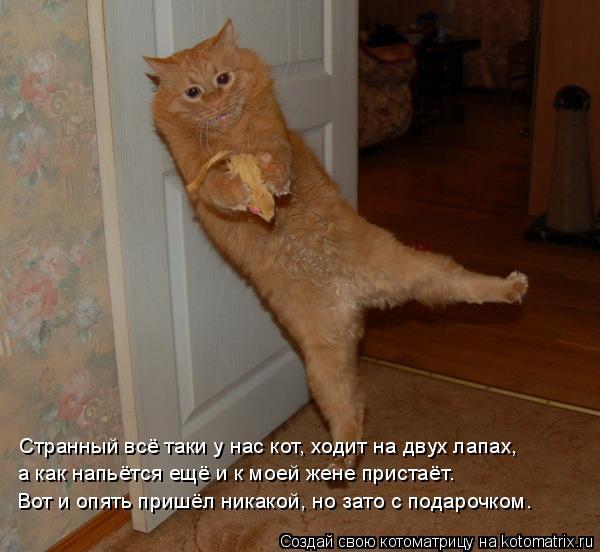 Котоматрица: Странный всё таки у нас кот, ходит на двух лапах, а как напьётся ещё и к моей жене пристаёт. Вот и опять пришёл никакой, но зато с подарочком.